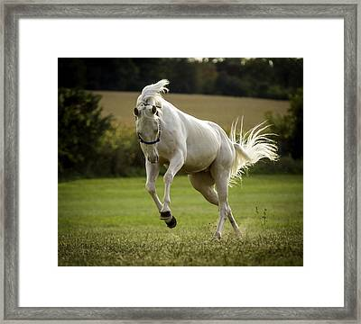 Tantrum 2 Framed Print by Jason Smith