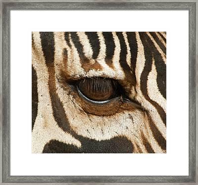 Tanzania, Tarangire National Park Framed Print by Jaynes Gallery