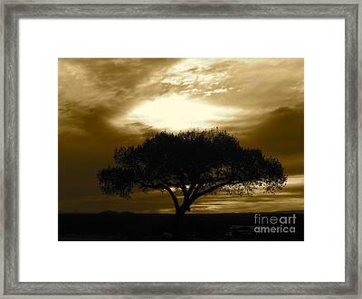 Taos Tree Framed Print