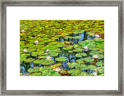 Tapestry Of Lillies Framed Print by Dan Carmichael