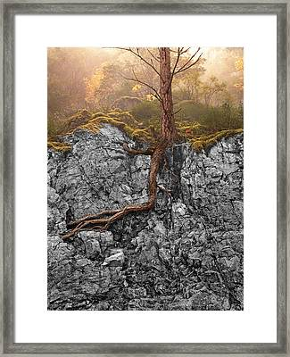 Taproot Framed Print by Mary Jo Allen