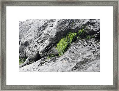 Framed Print featuring the photograph Tar  by Minnie Lippiatt