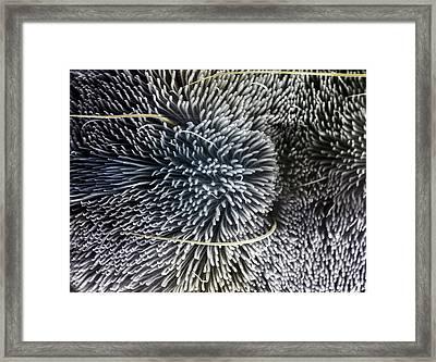Tarantula Foot Pad Framed Print by Alex Hyde
