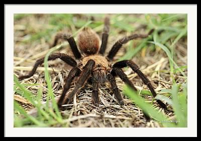 Big Spider Framed Prints