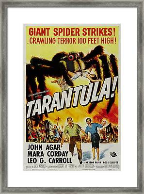 Tarantula Framed Print by Georgia Fowler