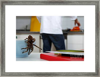Tarantula Trying To Escape Framed Print by Emilio Scoti