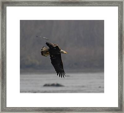 Target Spotted Framed Print by Glenn Lawrence