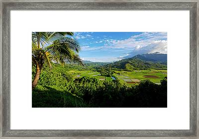 Taro Field, Hanalei Valley, Lookout Framed Print by Douglas Peebles