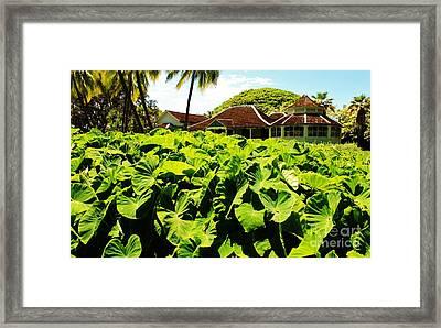 Taro Patch Framed Print by Craig Wood