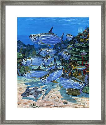 Tarpon Alley In0019 Framed Print by Carey Chen