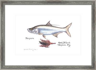 Tarpon And Red Black Tarpon Fly Framed Print
