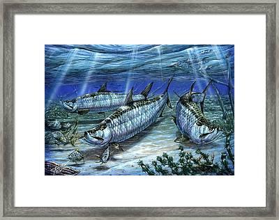 Tarpon In Paradise - Sabalo Framed Print