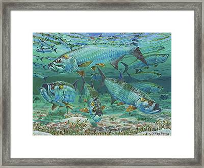 Tarpon Rolling In0025 Framed Print