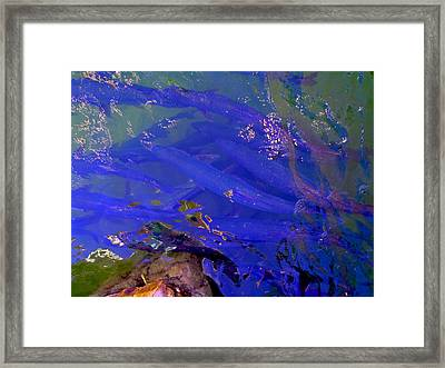 Tarpon Stack Framed Print by Carey Chen