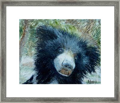 Taruni Bear Framed Print by Ann Radley