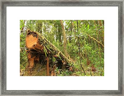 Tasmanian Rain Forest All Profits Go To Hospice Of The Calumet Area Framed Print