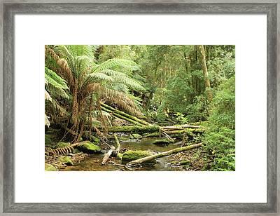Tasmanian Rain Forest River All Profits Go To Hospice Of The Calumet Area Framed Print