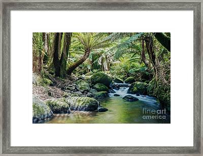 Tasmanian Rainforest Framed Print by Matteo Colombo