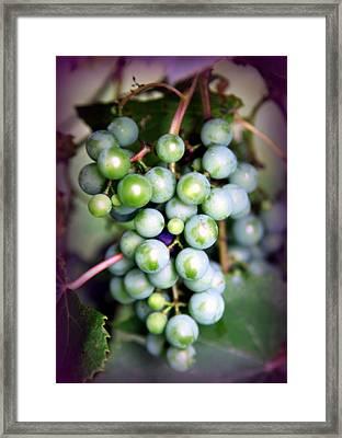 Taste Of Nature Framed Print by Karen Wiles