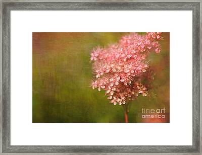 Taste Of Summer Framed Print by Beve Brown-Clark Photography