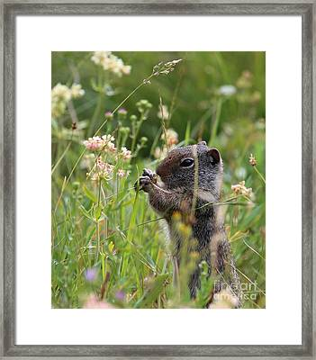Tasty Framed Print by Marty Fancy
