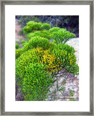 Tatalencho Framed Print by Susan Schroeder