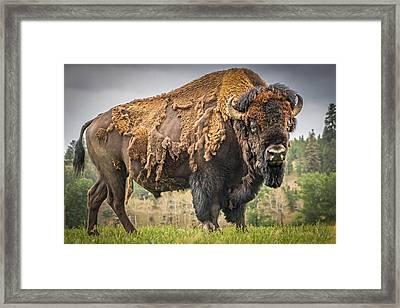 Tatanka - American Bison Framed Print by Mark Mesenko