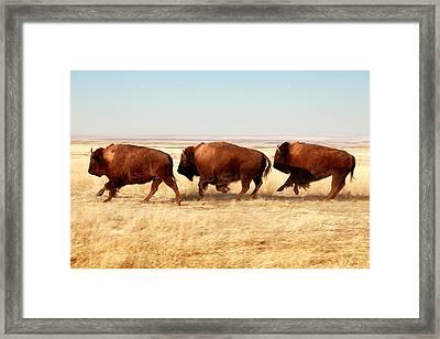 Tatanka Framed Print by Todd Klassy