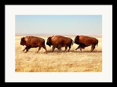 Westerns Framed Prints