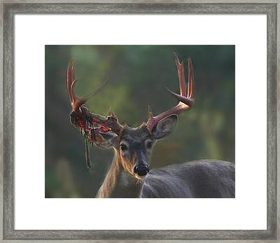 Tattered Stag Framed Print