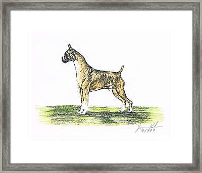 Tawny Boxer Framed Print by Joann Renner