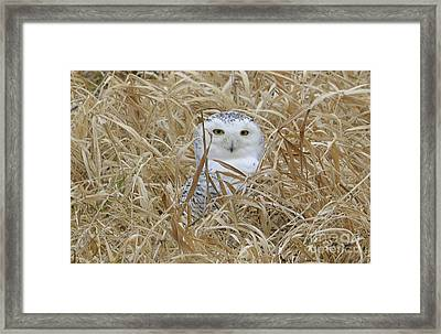 Framed Print featuring the photograph Taylor Snow by Randy Bodkins