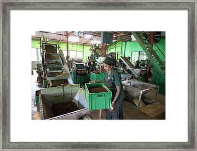 Tea Factory Framed Print