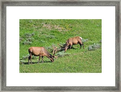 Tea For Two Framed Print by Peter Hennessey