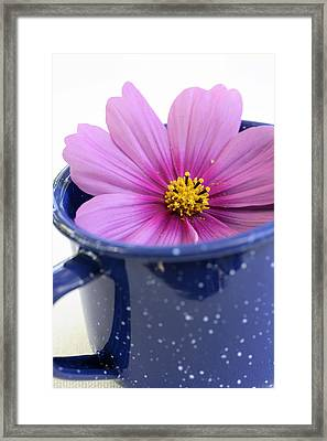 Tea Garden Framed Print by Frank Tschakert