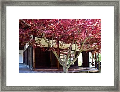 Tea House Thru The Maple Framed Print by Tom Gari Gallery-Three-Photography