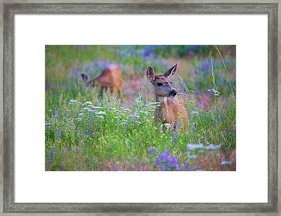 Tea Party Framed Print by Jim Garrison