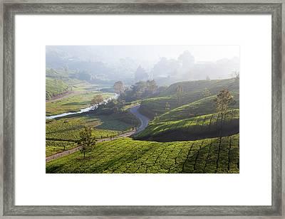 Tea Plantations, Munnar, Western Ghats Framed Print
