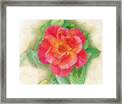 Tea Rose Framed Print by Audrey Van Tassell