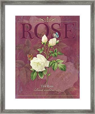 Tea Rose Framed Print by Tammy Apple
