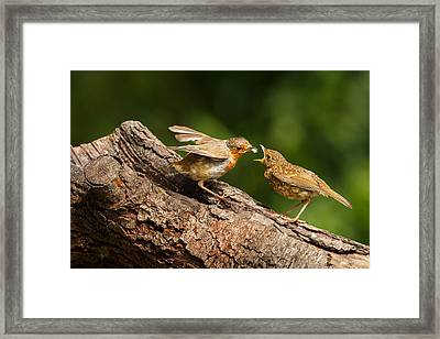 Tea Time For Robins Framed Print