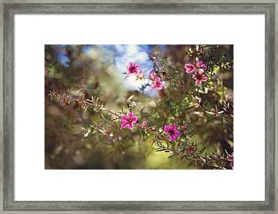 Tea Tree Flowers Framed Print by April Reppucci
