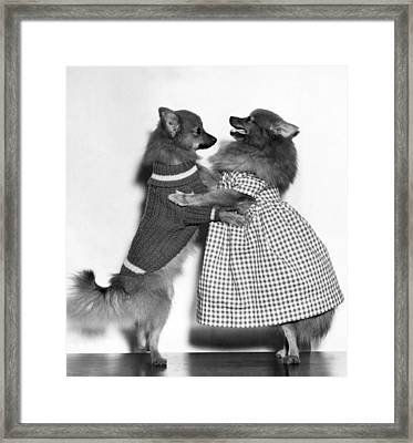 Teaching A Young Dog New Trick Framed Print by Underwood Archives