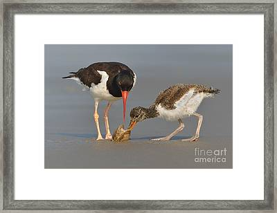Teaching The Young Framed Print by Jerry Fornarotto
