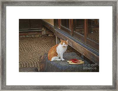 Teahouse Cat Framed Print by Danilo Piccioni