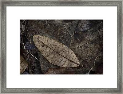 Teak And Mango Framed Print by David Longstreath