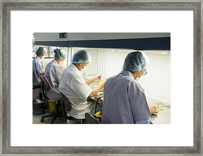 Teak Cloning, Malaysia Framed Print by Science Photo Library