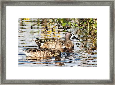 Teal Couple Framed Print by Norman Johnson