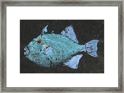 Gyotaku Triggerfish Framed Print by Captain Warren Sellers