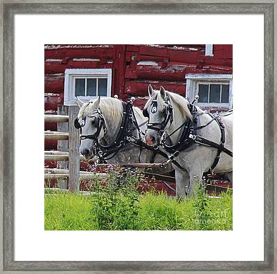 Framed Print featuring the photograph Team Of Greys by Ann E Robson